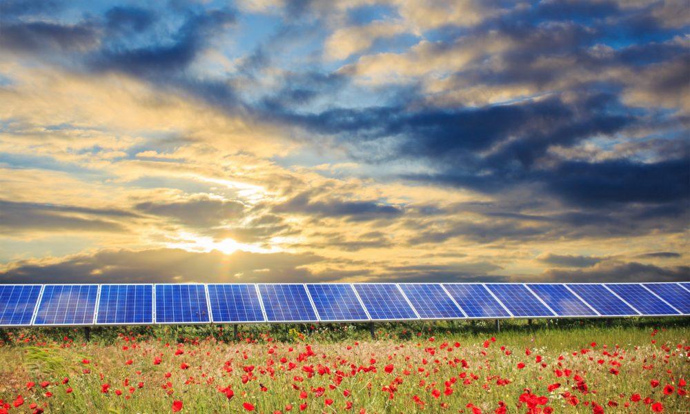 Solar panels under sunset summer sky on field of flowers